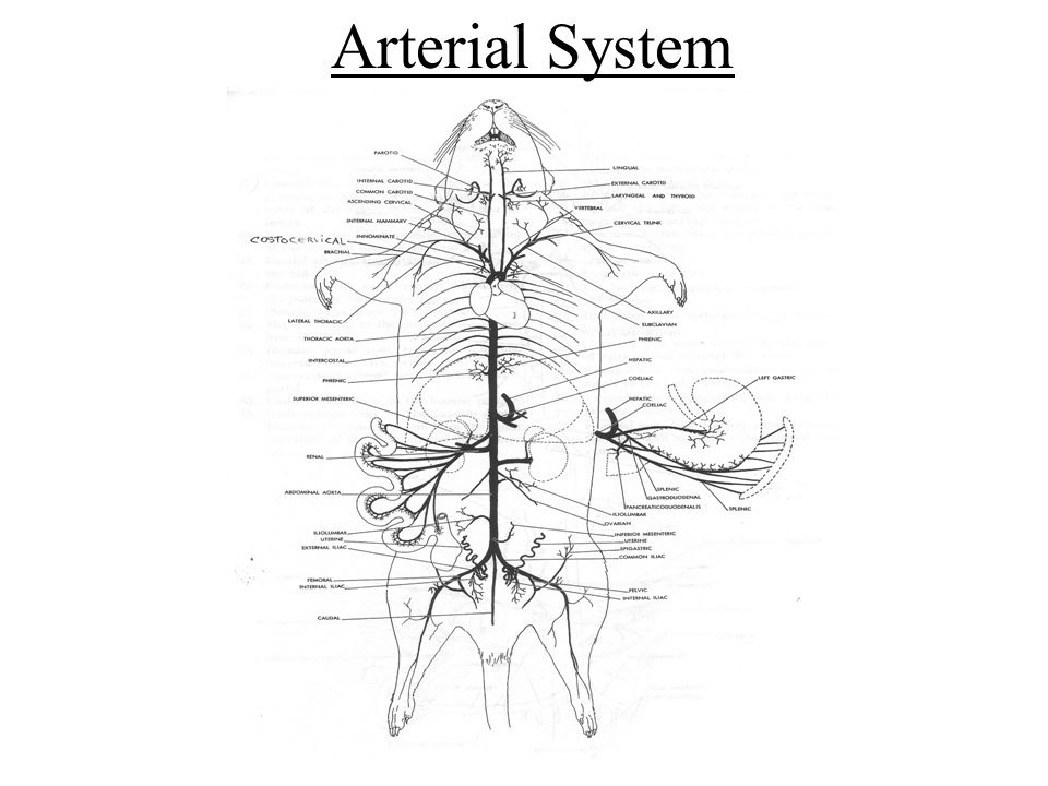 An Exploration Of The Various Organs Systems Ppt Video Online Download