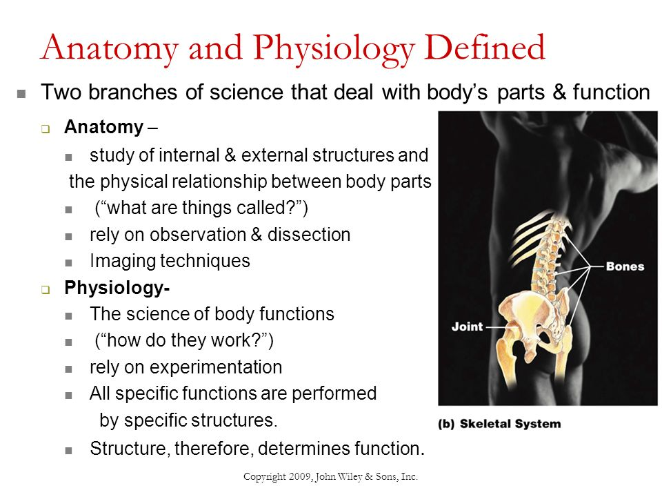 Chapter 1: An Introduction to the Human Body - ppt download