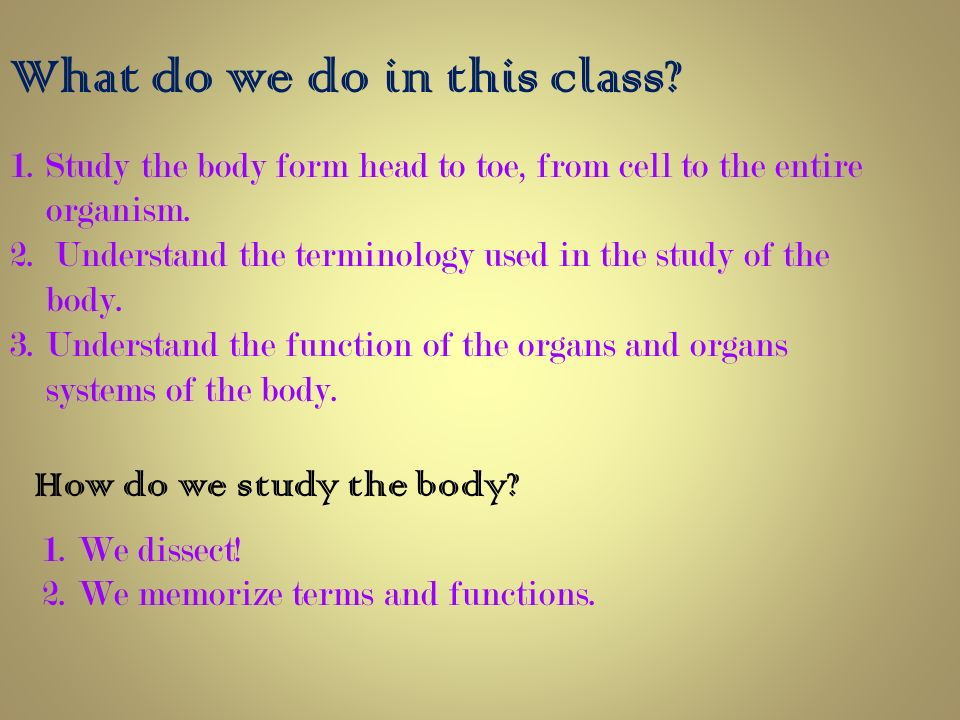 Anatomy & Physiology What is Anatomy? - ppt video online download