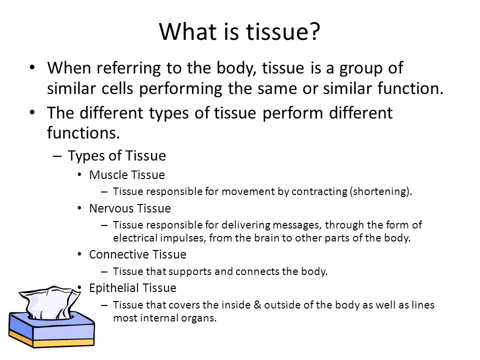 What is tissue When referring to the body, tissue is a group of similar cells performing the same or similar function.