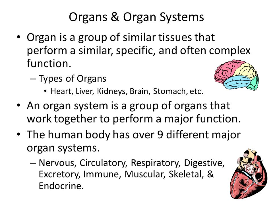 Organs & Organ Systems Organ is a group of similar tissues that perform a similar, specific, and often complex function.
