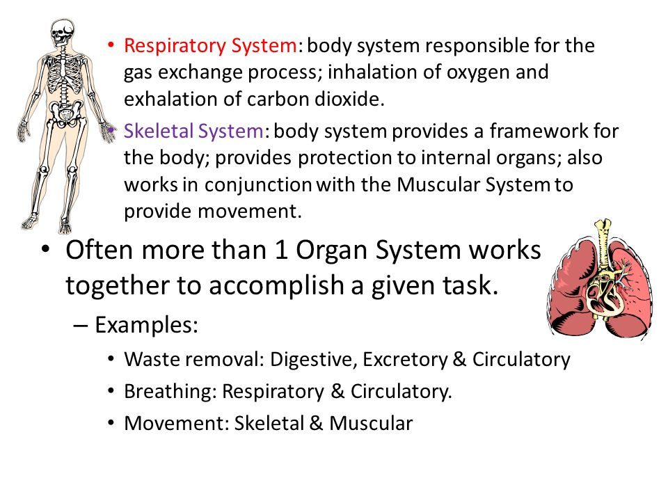Respiratory System: body system responsible for the gas exchange process; inhalation of oxygen and exhalation of carbon dioxide.
