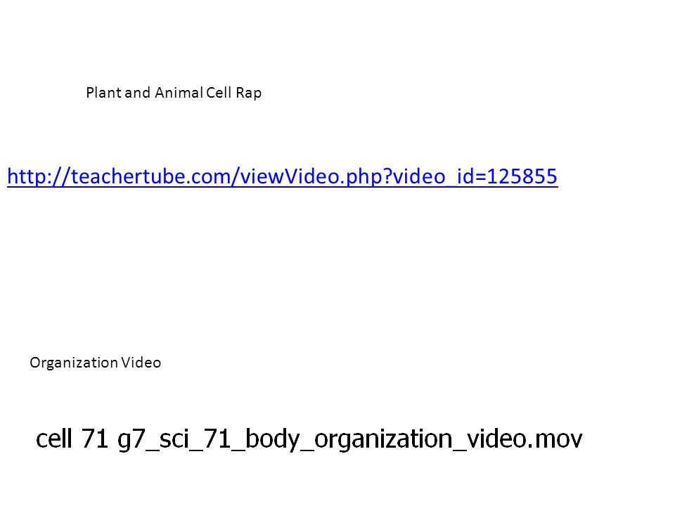 Plant and Animal Cell Rap