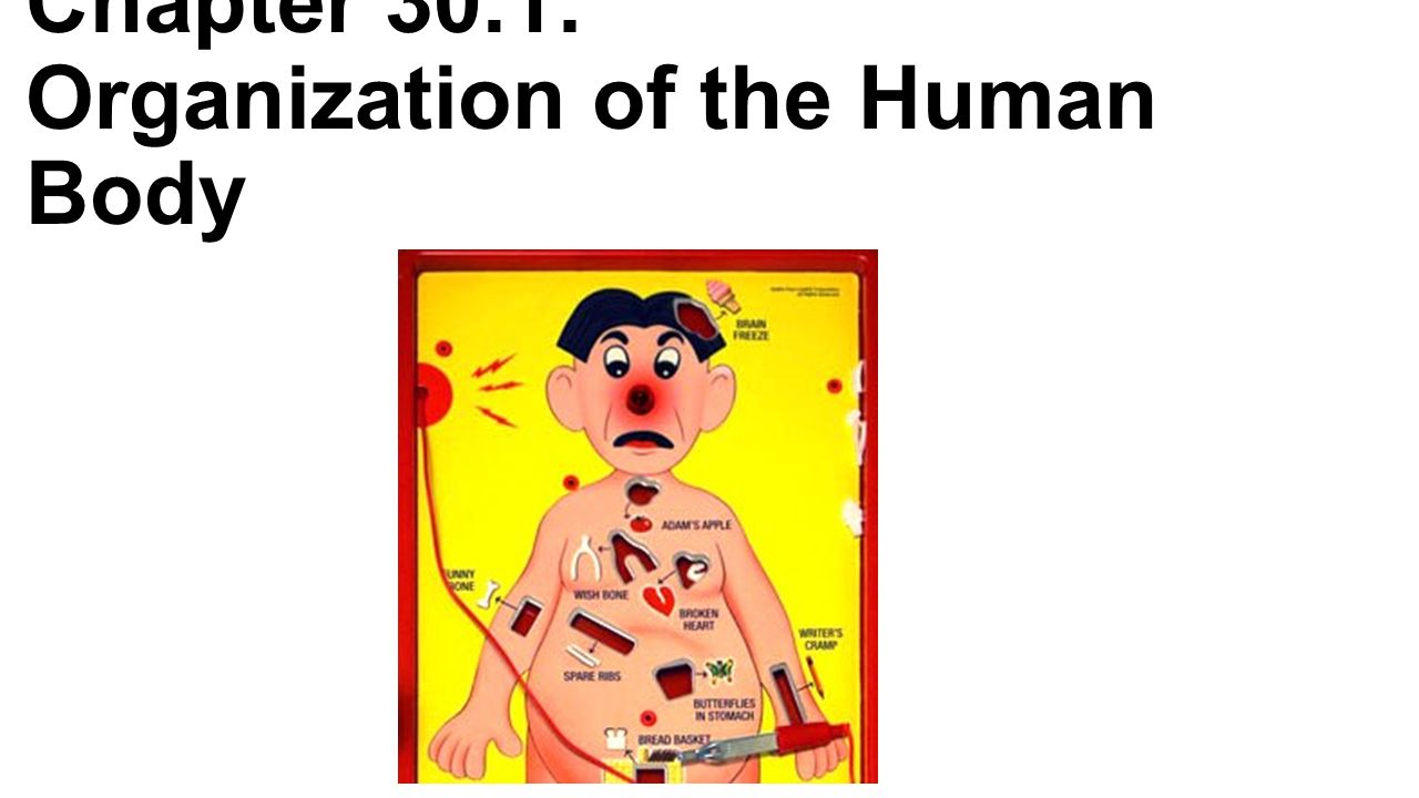 Chapter 30.1: Organization of the Human Body