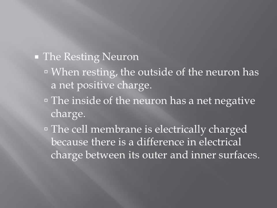 The Resting Neuron When resting, the outside of the neuron has a net positive charge. The inside of the neuron has a net negative charge.