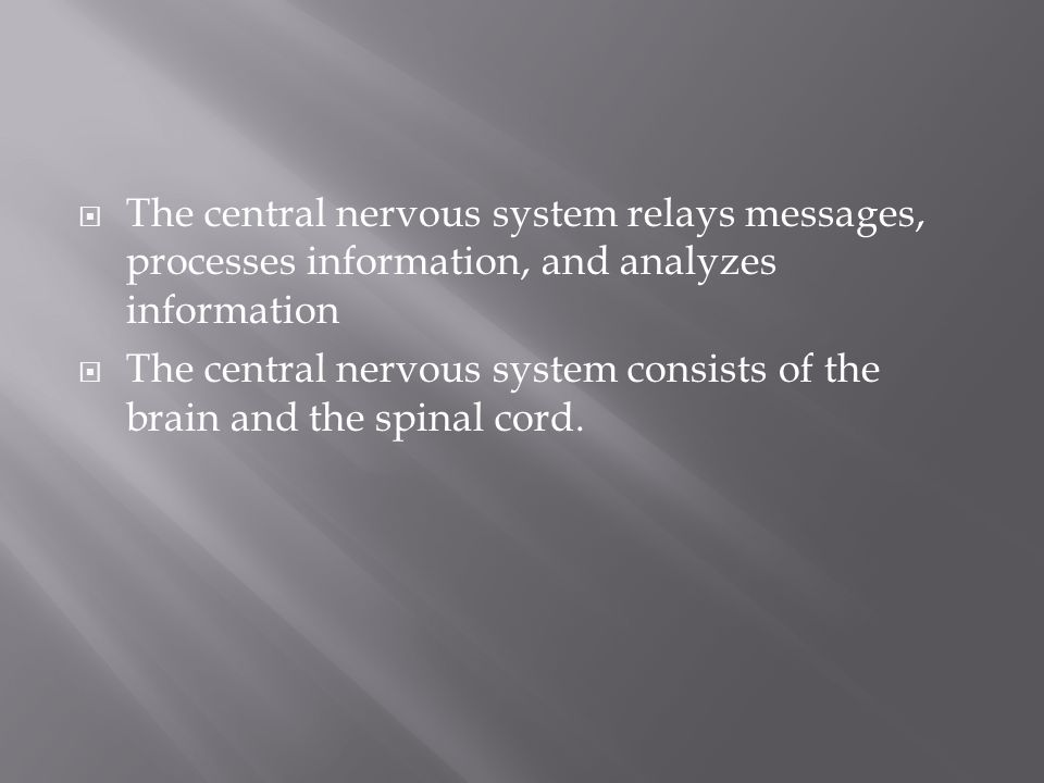 The central nervous system relays messages, processes information, and analyzes information