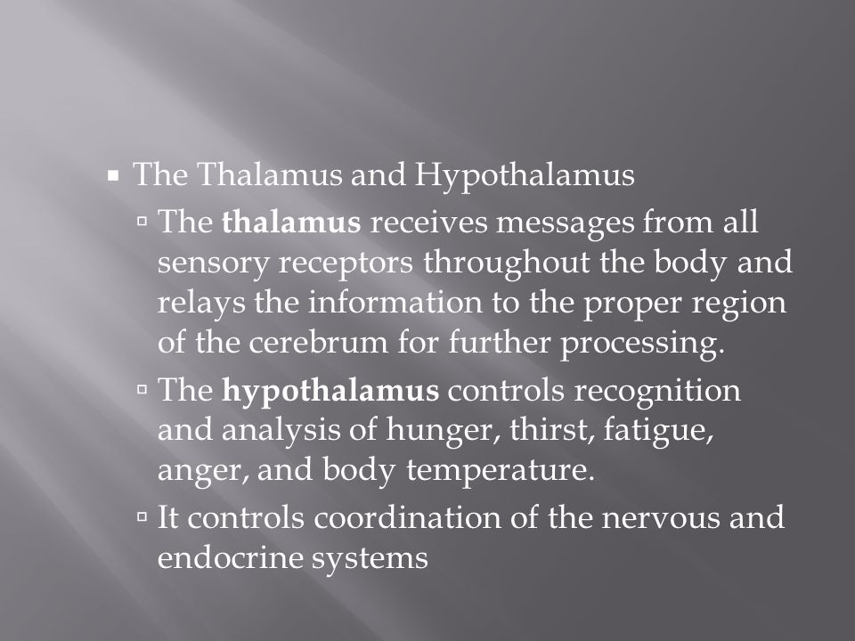 The Thalamus and Hypothalamus