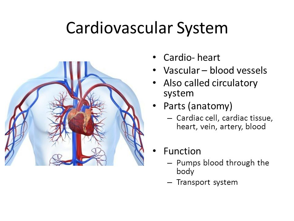 The Body Systems. - ppt video online download
