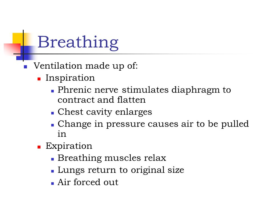 Breathing Ventilation made up of: Inspiration