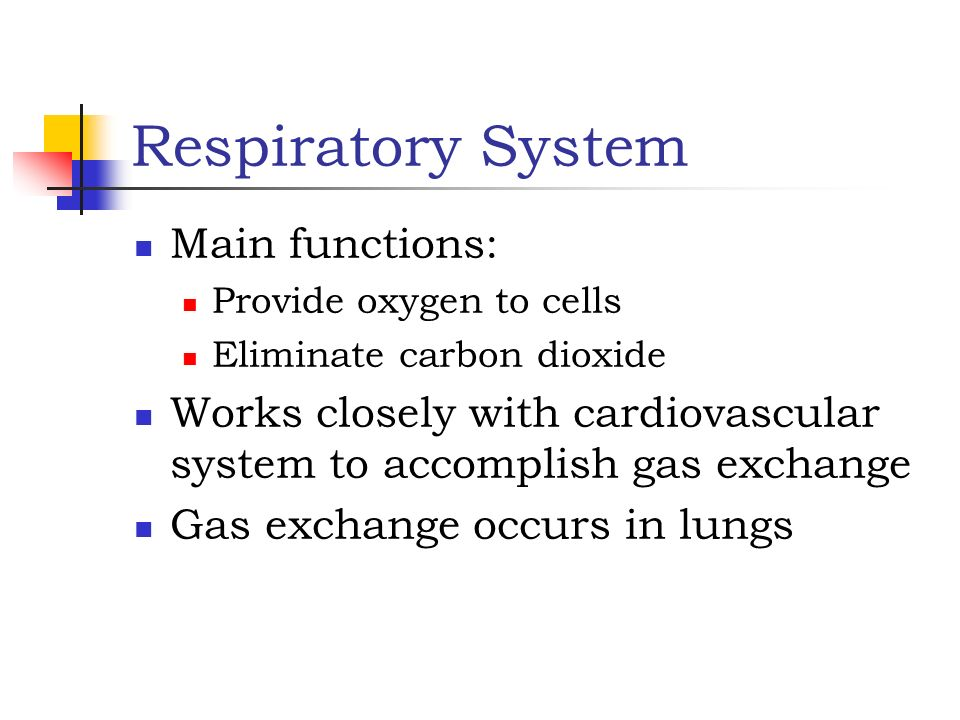 Respiratory System Main functions: