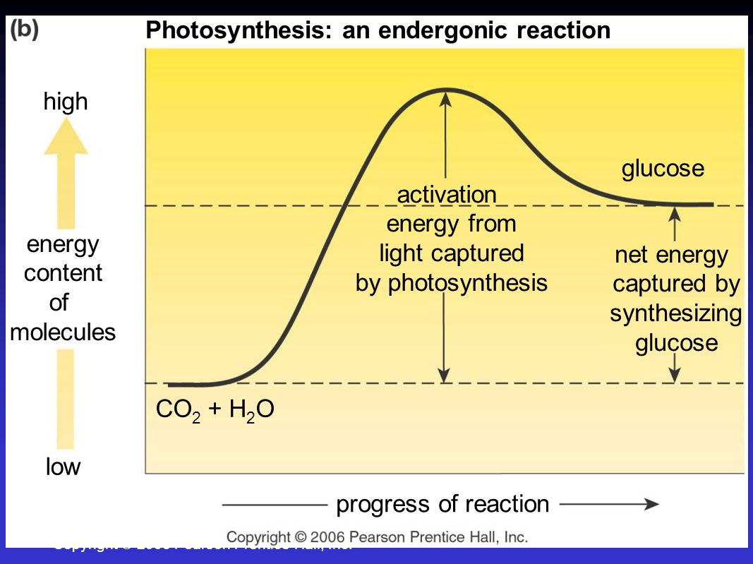 Endergonic reaction - Wikipedia