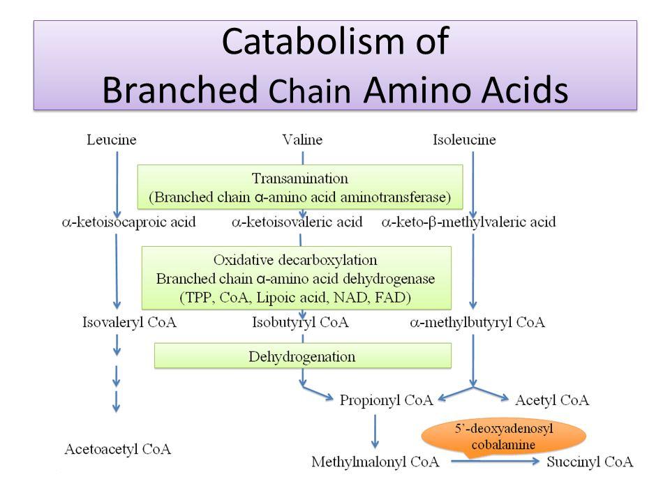Metabolism of Amino Acid - ppt video online download