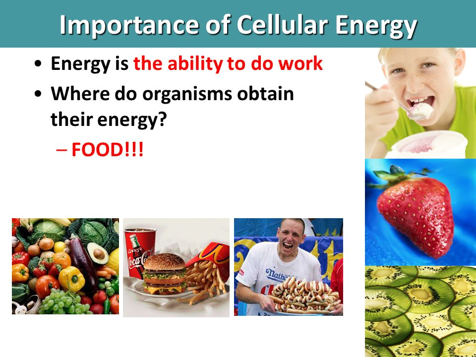 Do Organisms Directly Use The Energy Stored In Food