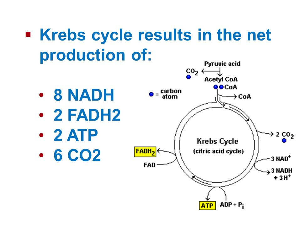 Krebs cycle results in the net production of:
