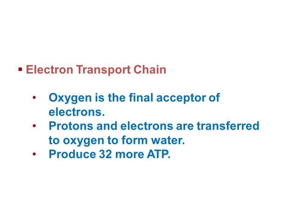 Electron Transport Chain Oxygen is the final acceptor of electrons.