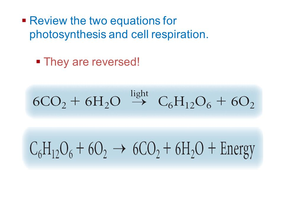 Review the two equations for photosynthesis and cell respiration.