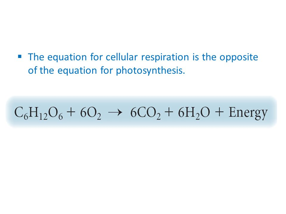 The equation for cellular respiration is the opposite of the equation for photosynthesis.