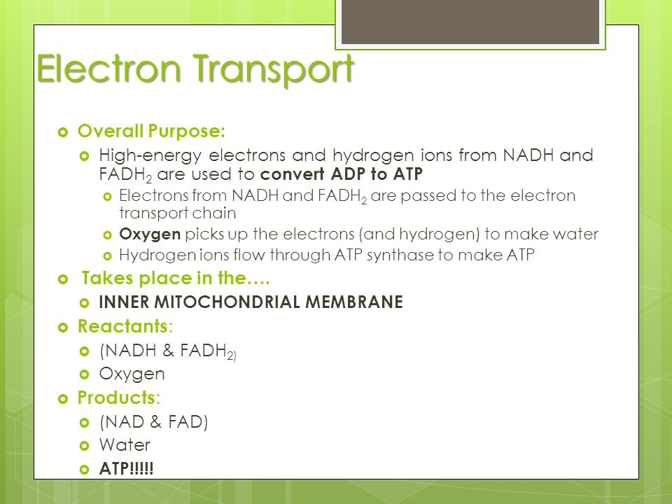 Electron Transport Overall Purpose: Takes place in the…. Reactants: