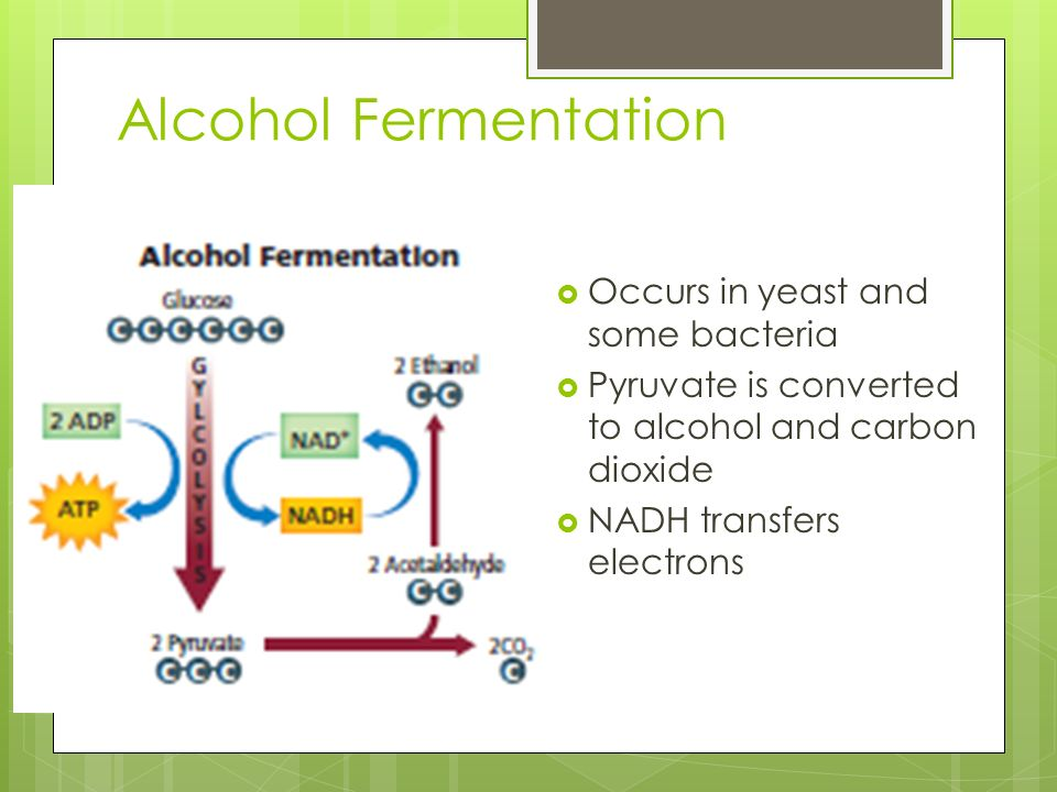 Alcohol Fermentation Occurs in yeast and some bacteria