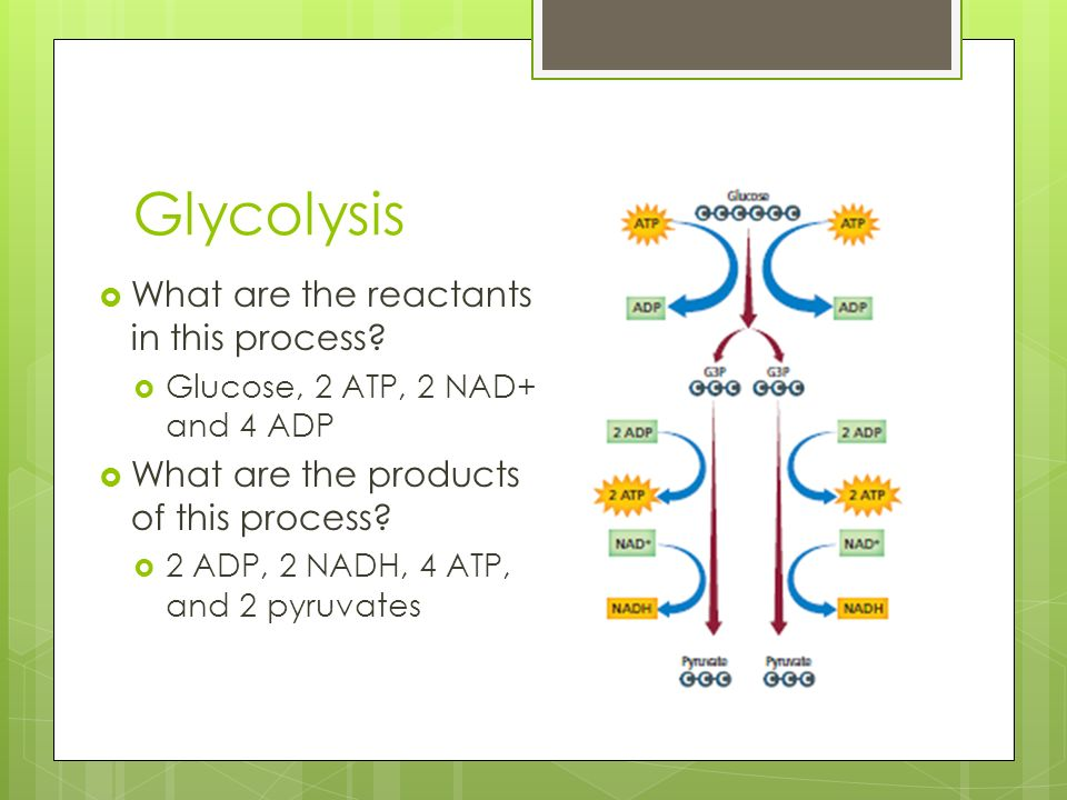 Glycolysis What are the reactants in this process