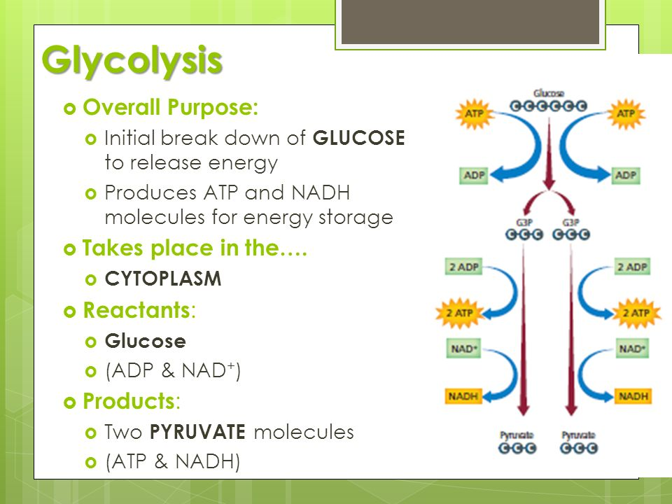 Glycolysis Overall Purpose: Takes place in the…. Reactants: Products: