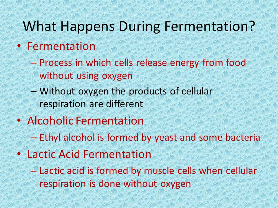 What Happens During Fermentation