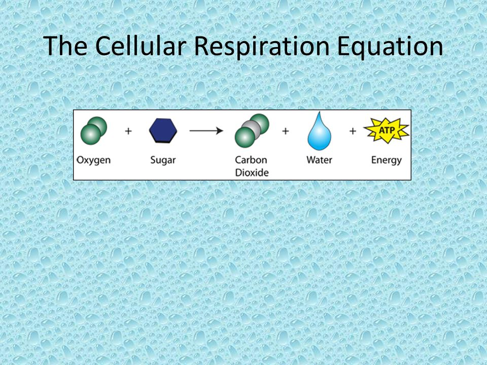 The Cellular Respiration Equation
