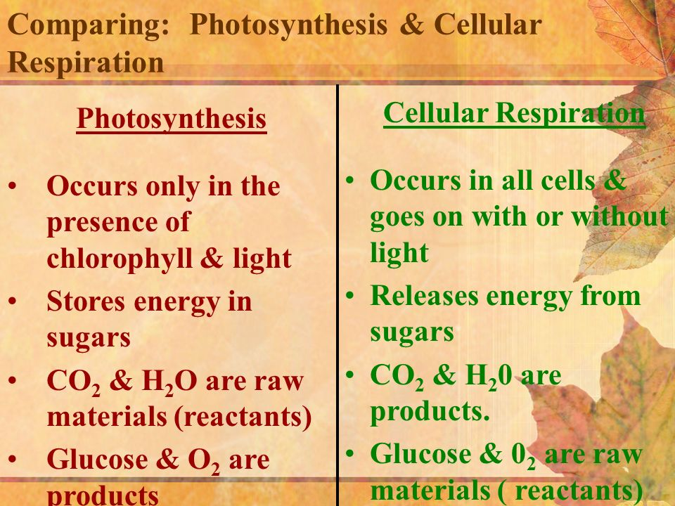 differences and similarities between respiration and photosynthesis essay Photosynthesis & cellular respiration are the main pathways of energy flow in living things both of these processes are quite similar yet differentiate vastly in this essay i'll be comparing and there are many similarities and differences between the processes of aerobic respiration and.