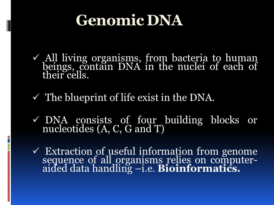 Reading the blueprint of life ppt video online download genomic dna all living organisms from bacteria to human beings contain dna in the malvernweather Gallery