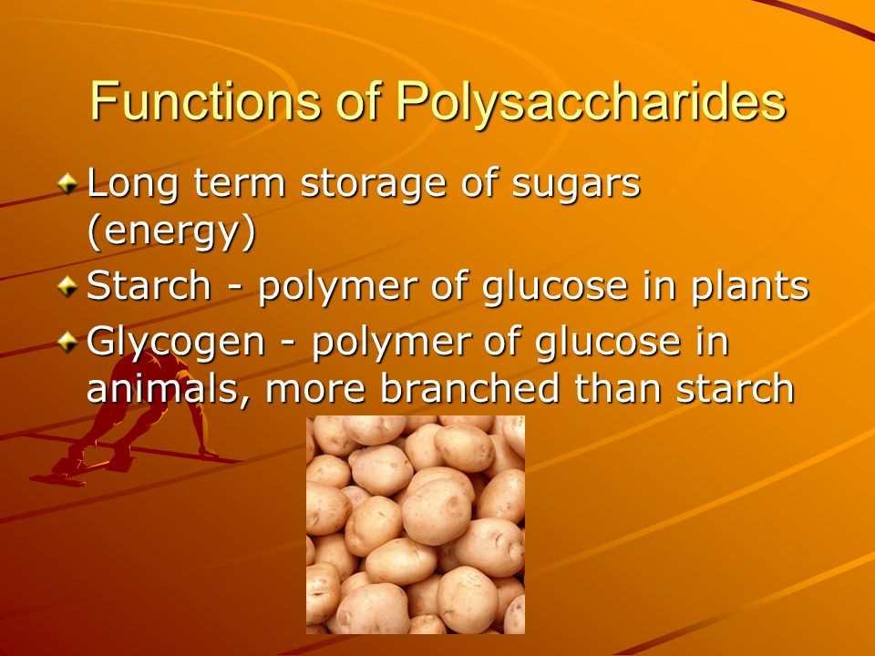Functions of Polysaccharides