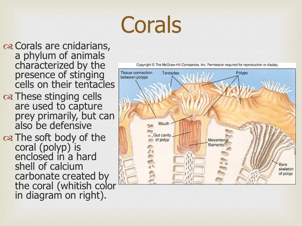 Coral Reefs Shipley Marine Bio Summit High School - ppt video online ...