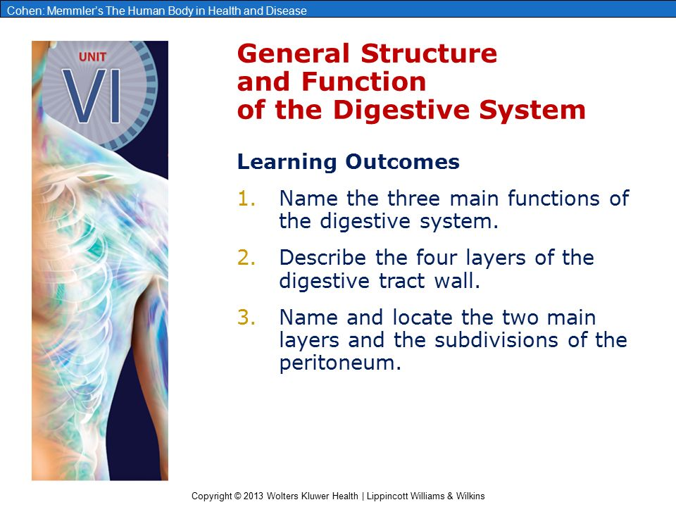 brookline college chapter 8 digestive system Study chapter 5-6 digestive system flashcards from pieter rademacher's college of dupage class online, or in brainscape's iphone or android app learn faster with spaced repetition.