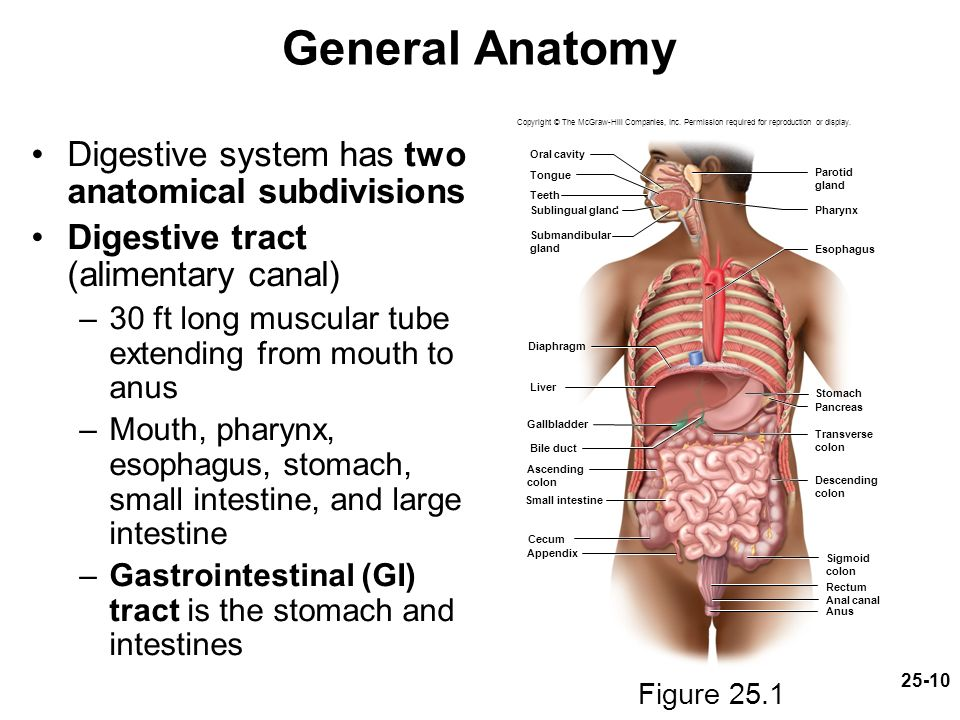 Chapter 25 Lecture Powerpoint The Digestive System Ppt Download