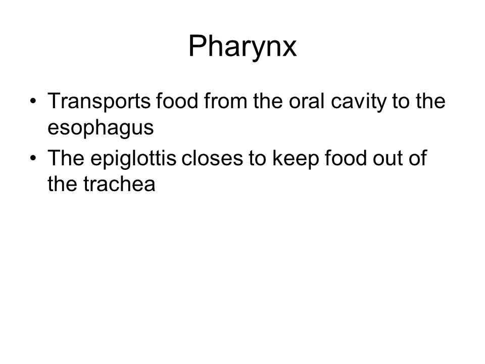 Pharynx Transports food from the oral cavity to the esophagus