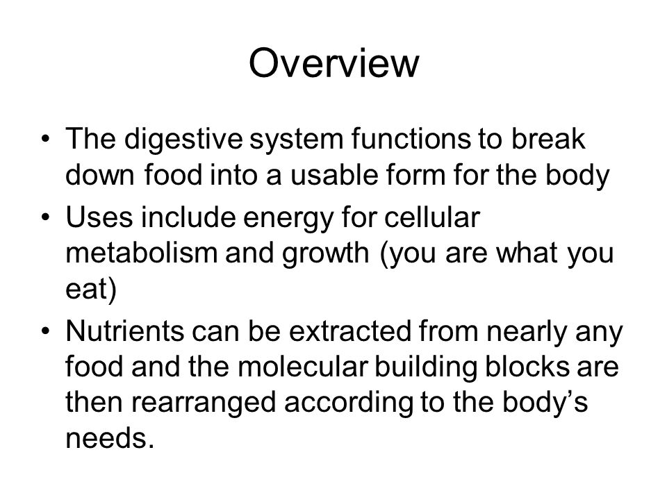 Overview The digestive system functions to break down food into a usable form for the body.