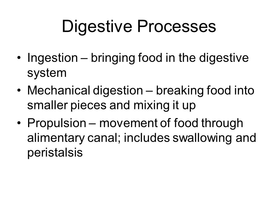 Digestive Processes Ingestion – bringing food in the digestive system