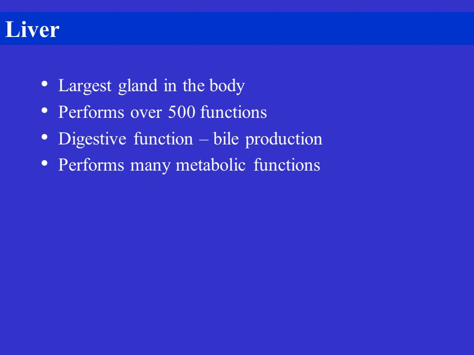 Liver Largest gland in the body Performs over 500 functions