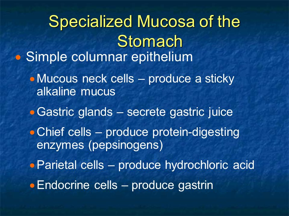 Chapter 14 The Digestive System And Body Metabolism Ppt Video