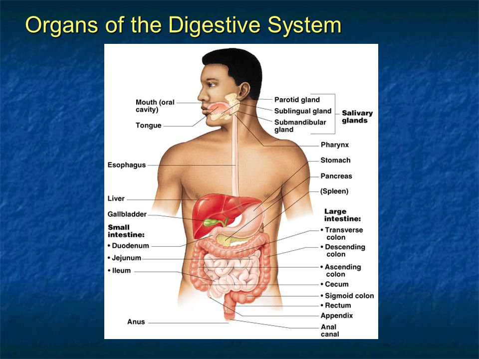 Chapter 14 The Digestive System And Body Metabolism Coloring Book ...