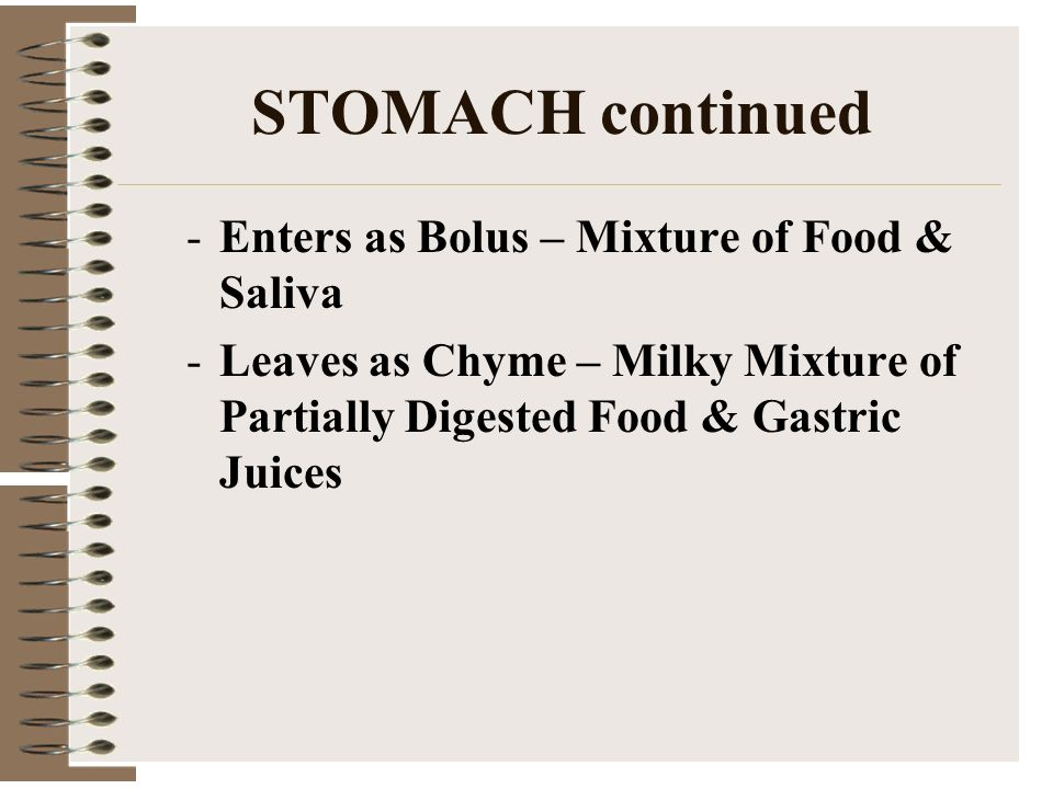 STOMACH continued Enters as Bolus – Mixture of Food & Saliva