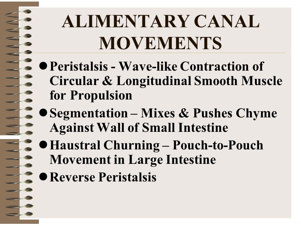 ALIMENTARY CANAL MOVEMENTS