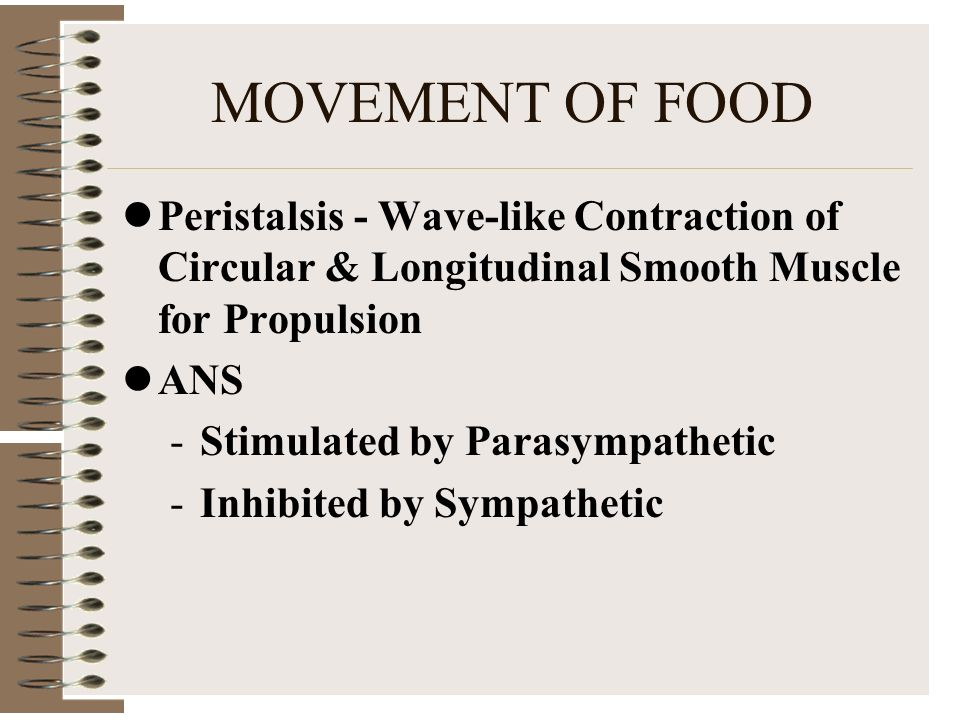 MOVEMENT OF FOOD Peristalsis - Wave-like Contraction of Circular & Longitudinal Smooth Muscle for Propulsion.