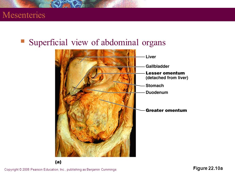 Part 1 The Digestive System Ppt Video Online Download