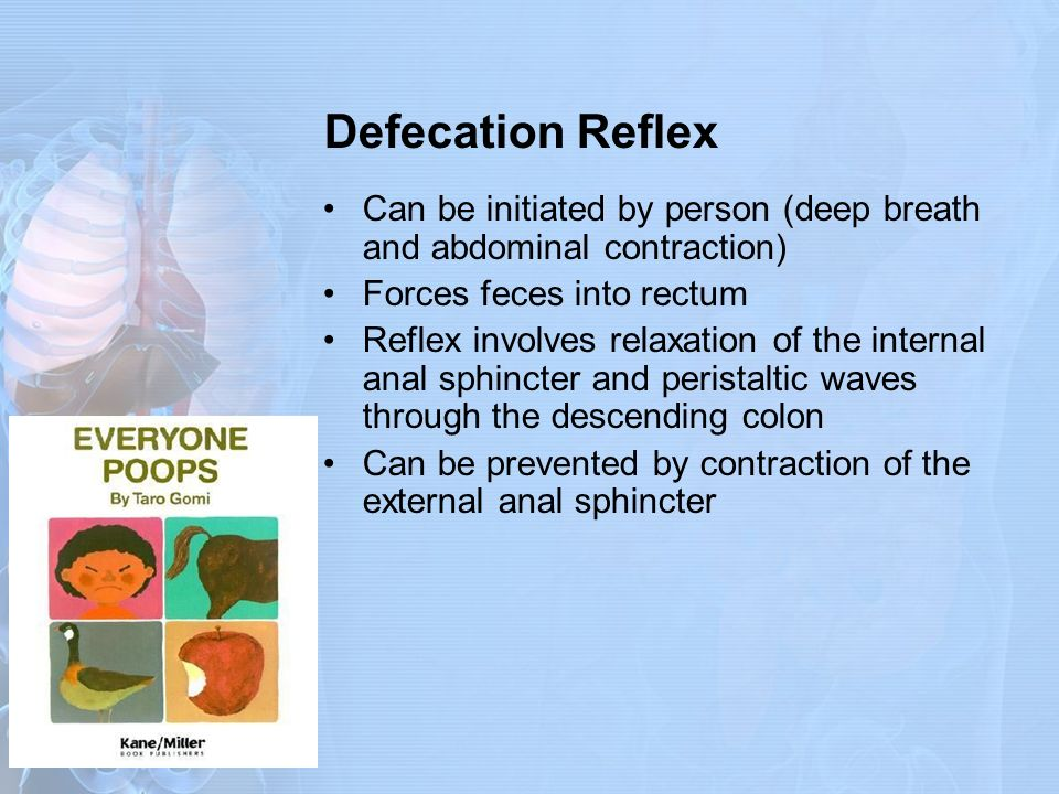 Defecation Reflex Can be initiated by person (deep breath and abdominal contraction) Forces feces into rectum.