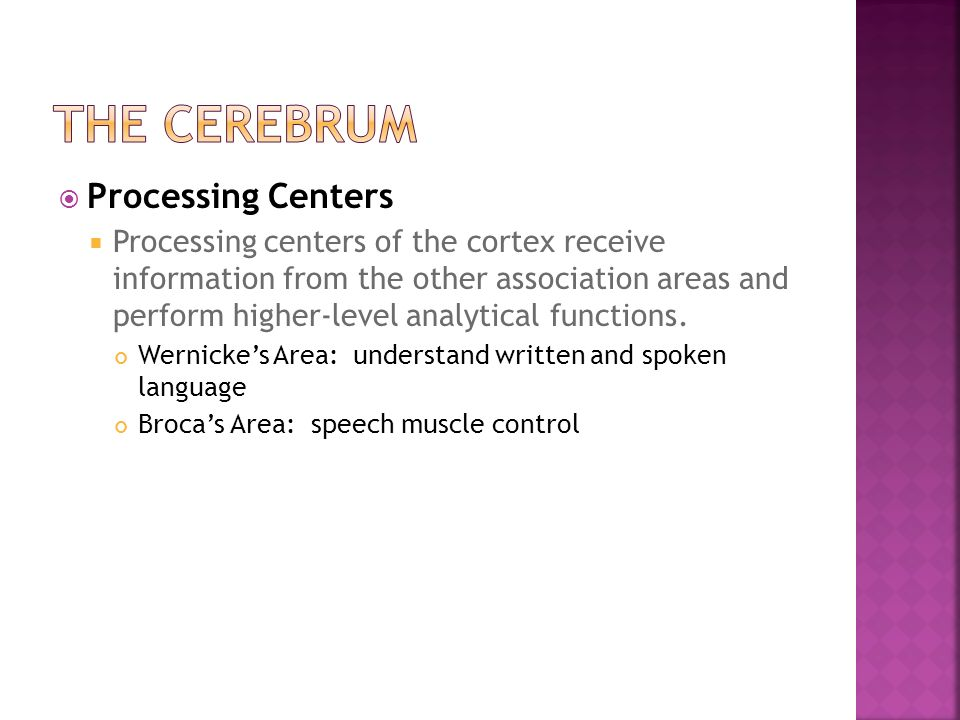 The Cerebrum Processing Centers