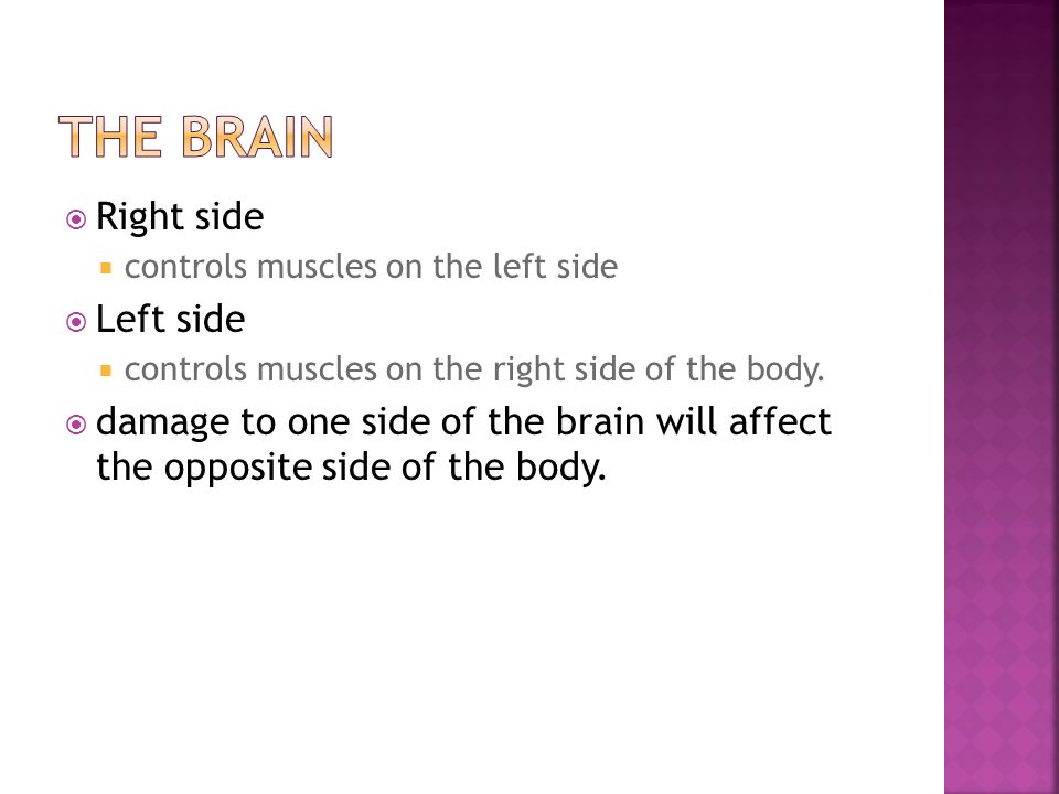 The Brain Right side Left side