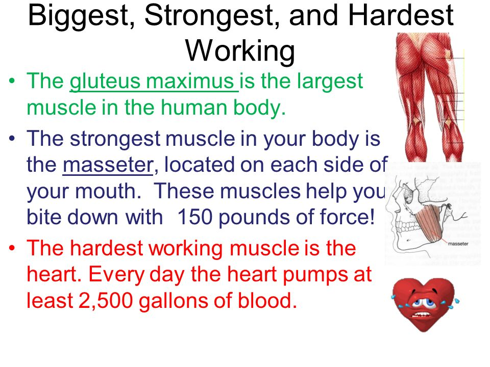 where are the strongest muscles in your body