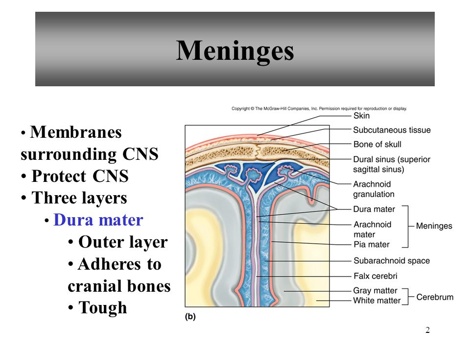 Chapter 11 Brain Anatomy & Functions - ppt video online download