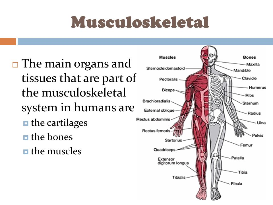 the musculoskeletal system The human skeleton is the internal framework of the body it is composed of around 270 bones at birth - this total decreases to around 206 bones by adulthood after some bones get fused together [1.