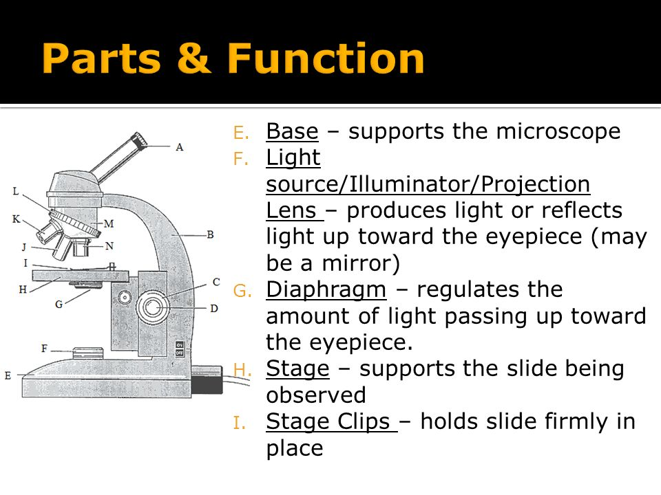 Compound Light Microscope Ppt Video Online Download